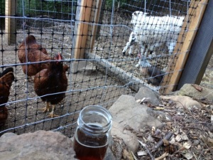 Chickens - check. Beer - check. Mason jars - check.